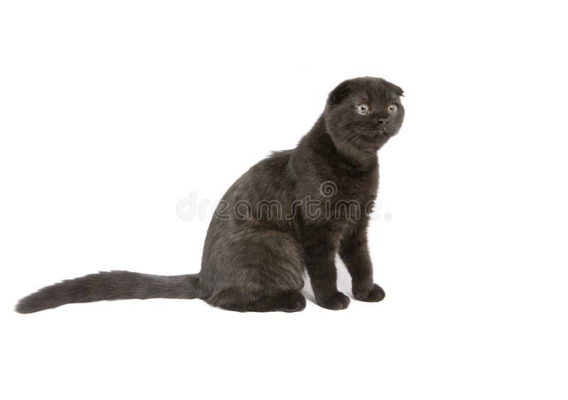 Met hangende oren kat stock foto