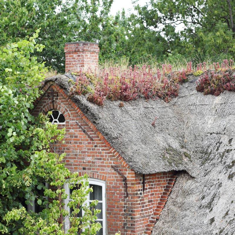 Met stro bedekt dak met het bloeien houseleek, Sempervivum-tectorum royalty-vrije stock foto's