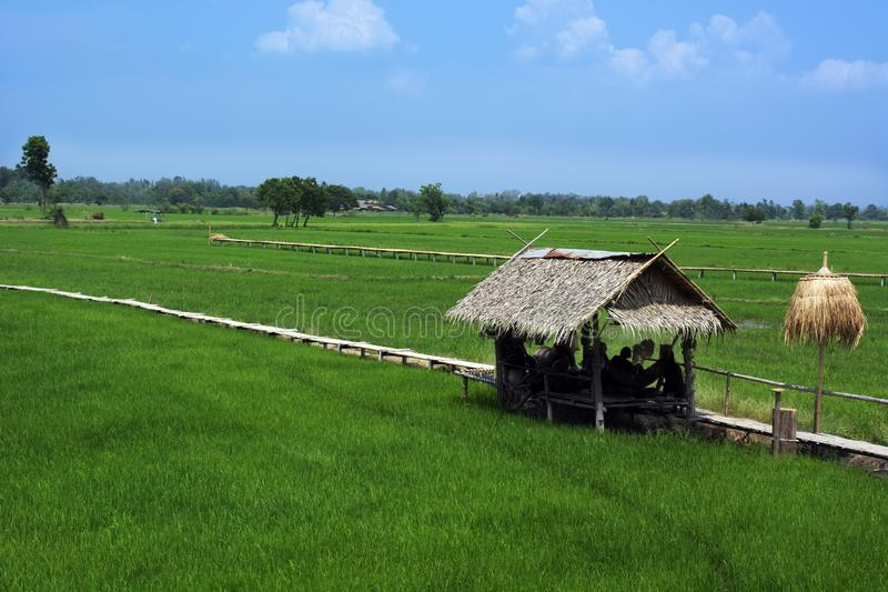 Met stro bedekt plattelandshuisje en houten weg in padieveld royalty-vrije stock foto's