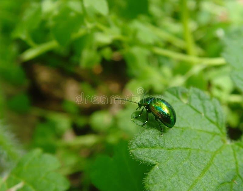 Metaal insect royalty-vrije stock afbeeldingen