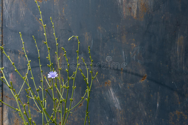 Metaal roestige geschilderde plaat royalty-vrije stock fotografie