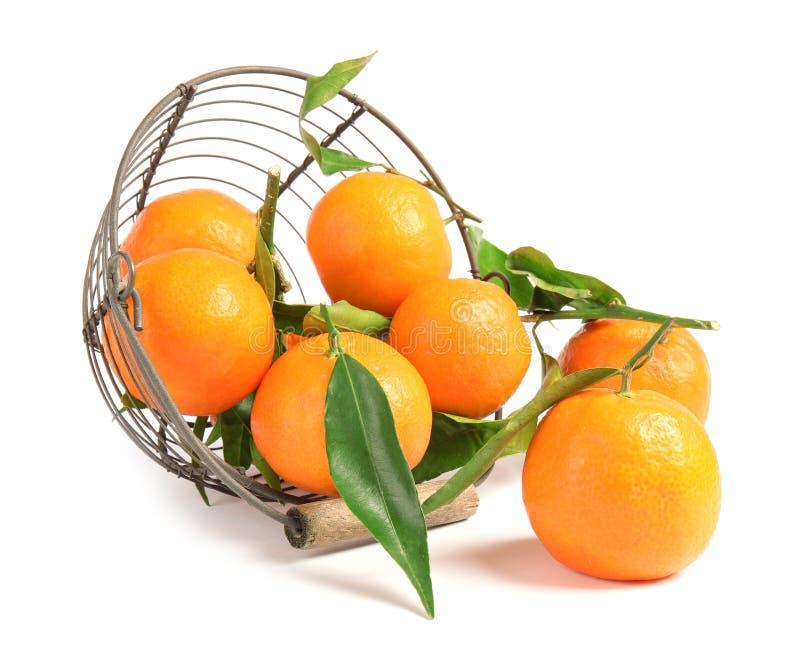 Metaalmand met smakelijke rijpe mandarijnen op witte achtergrond royalty-vrije stock afbeeldingen