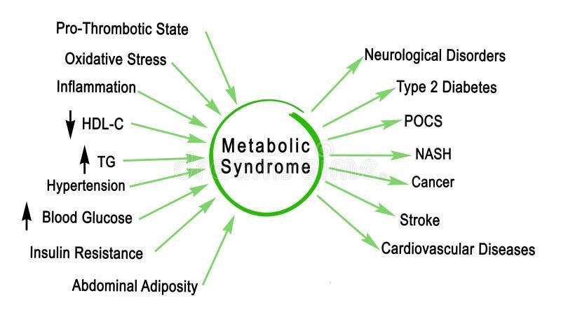Metabolisk syndrom royaltyfri illustrationer