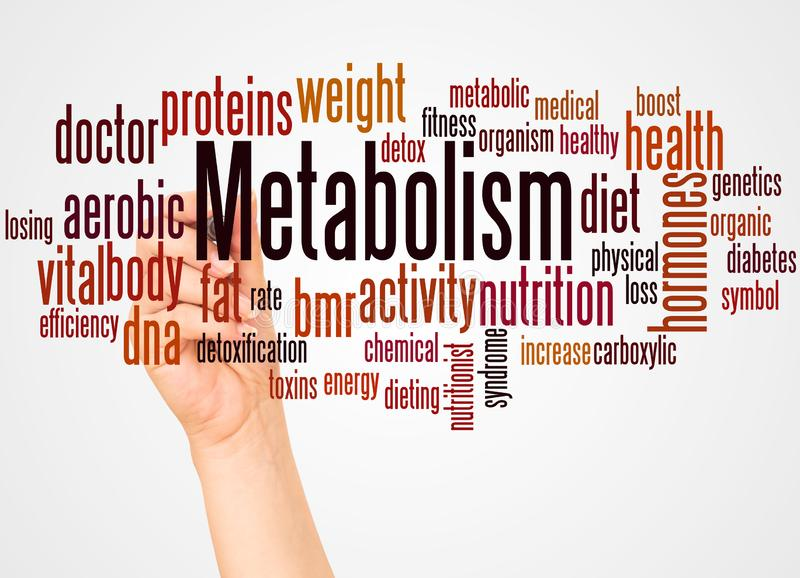 Metabolism word cloud and hand with marker concept. On white background stock image