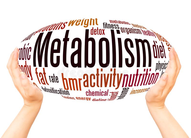 Metabolism word cloud hand sphere concept. On white background royalty free stock photography