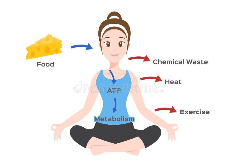 Metabolismo do corpo humano infographic/ ilustração stock