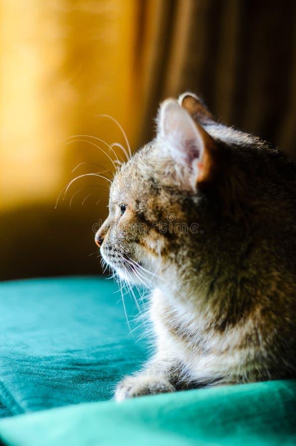 Metade-cara Tabby Cat Portret fotos de stock