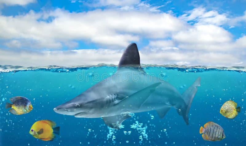 Metade da foto subaquática do paraíso tropical com um grupo de fisher colorido e de tubarão grande no Oceano Pacífico fotos de stock royalty free