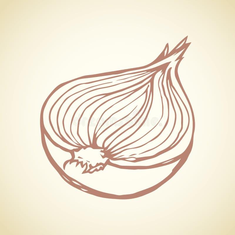 Metade das cebolas Desenho do vetor ilustração do vetor