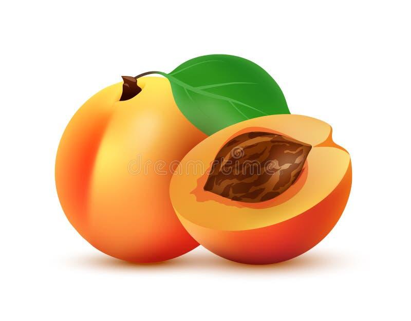 Metade e ilustração inteira do fruto do pêssego - ícone do vetor isolado no branco ilustração royalty free
