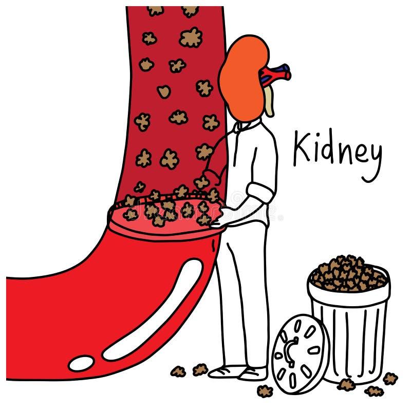 Metafoorfunctie van menselijke nier aan filterafval en bovenmatig FL royalty-vrije illustratie