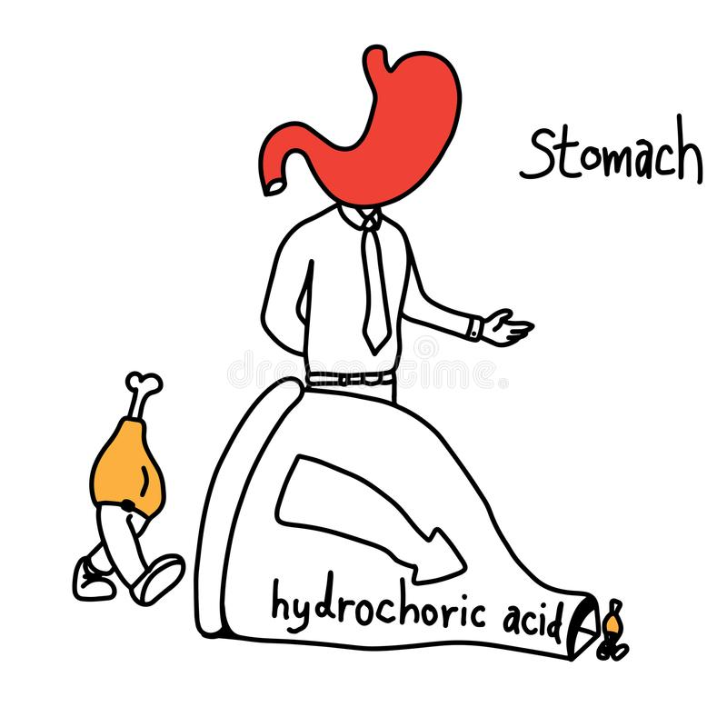 Metaforfunktion av magen som använder saltsyra för att göra fo stock illustrationer