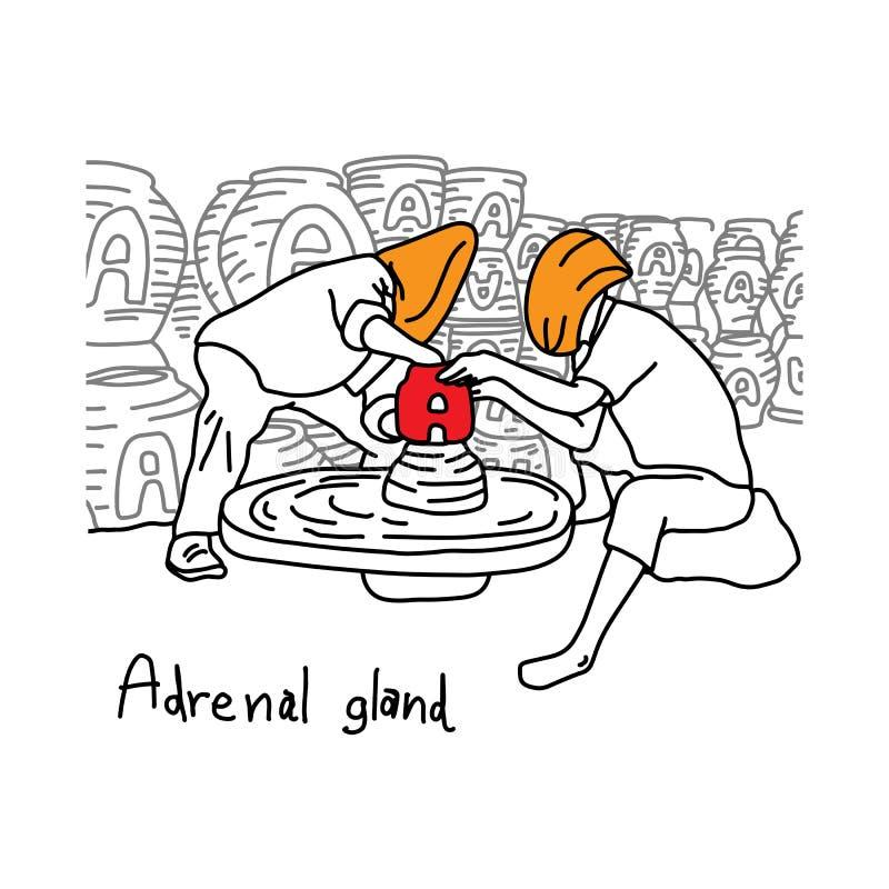 Metaforfunktionen av den binjur- körteln är att producera adrenalinhorm stock illustrationer