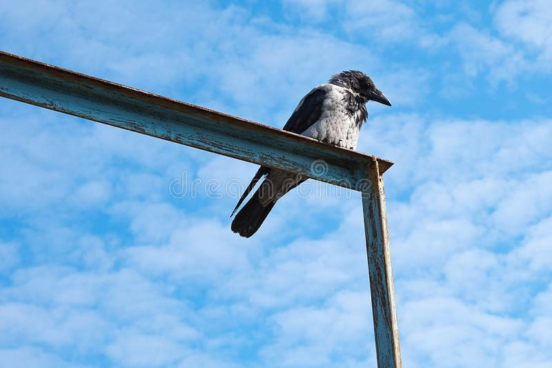 On metal the corners sits bird but, the background blue. The sky stock photo