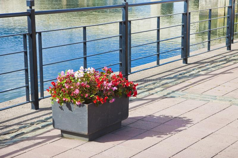 Metal flowerpot with red flowers in a sidewalk by the lake.  royalty free stock images