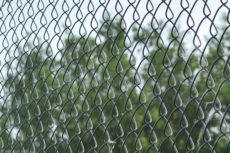 Metal mesh netting close-up. Rabitz. Close up. background. Abstraction. Mesh netting in perspective on a green background as a stock photo