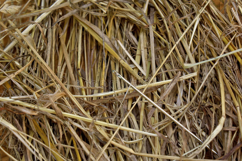 Metal needle in hay. Metal needle in dry haystack be able cheaply lose royalty free stock photo