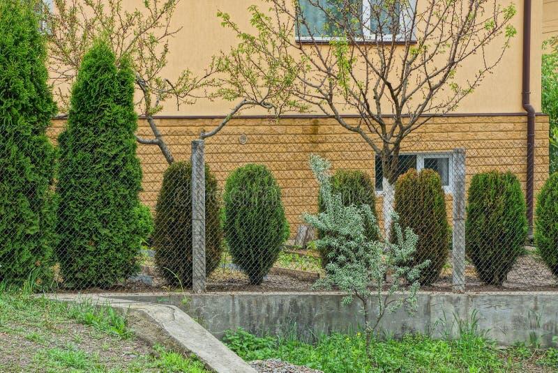 Metal siatki ogrodzenie i wiele iglaste zielone rośliny blisko brąz ściany zdjęcie stock