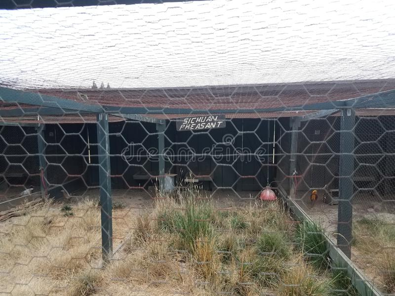Metal wire fence for bird enclosure with sichuan pheasant sign. Metal wire fence for bird or animal enclosure with sichuan pheasant sign royalty free stock photos