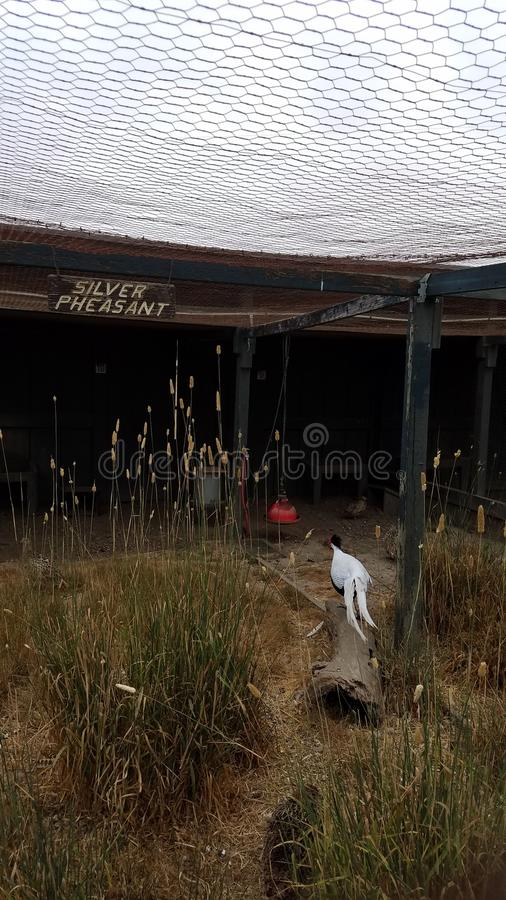 Metal wire fence for bird enclosure with silver pheasant sign. Metal wire fence for bird or animal enclosure with silver pheasant sign stock images