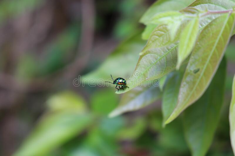 Metallic Beetle on Green Leaf during Daytime stock photos