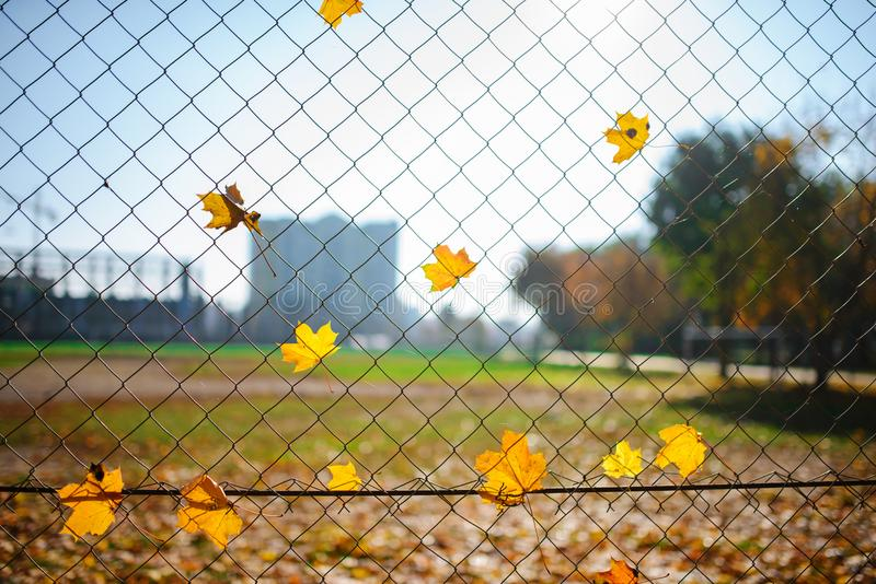 Metallic net-shaped fence from wire with autumn leaf stucked in it on a background of blur city royalty free stock photography