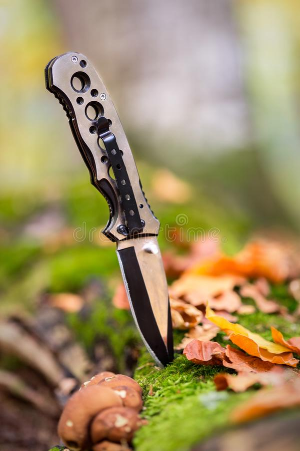 Metallisk kniv för att jaga som klibbas i skogen royaltyfria bilder
