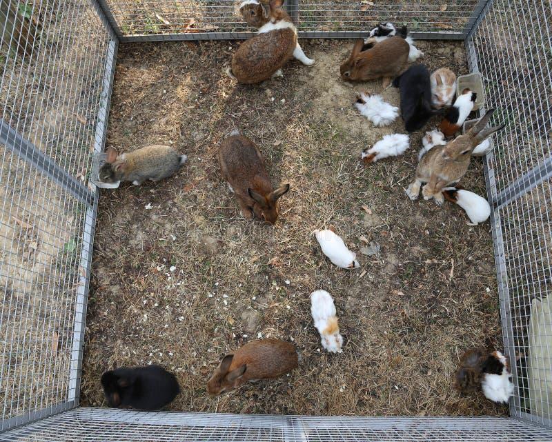 Metallkäfig Mit Vielen Kaninchen Stockbild - Bild von furchtsam ...