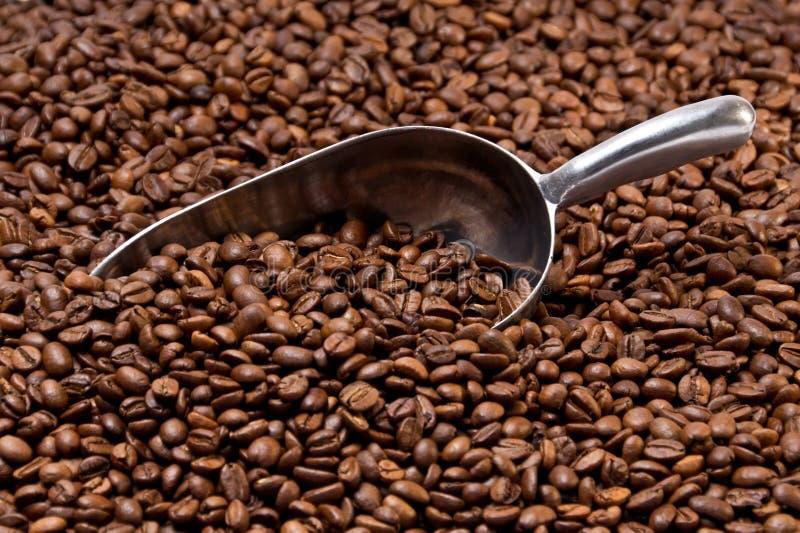 Metallschaufel teilweise begraben in den Kaffeebohnen lizenzfreies stockbild