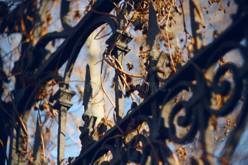 Metallzaun mit den Mustern und Stangen, überwältigt mit getrocknetem Efeu stockfotos