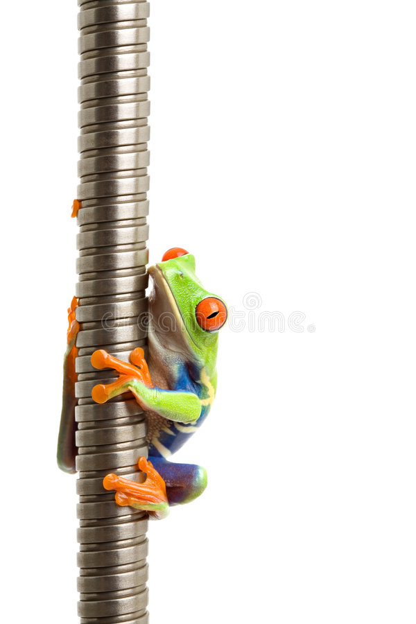 metalowa spirala żaba występować samodzielnie zdjęcie royalty free
