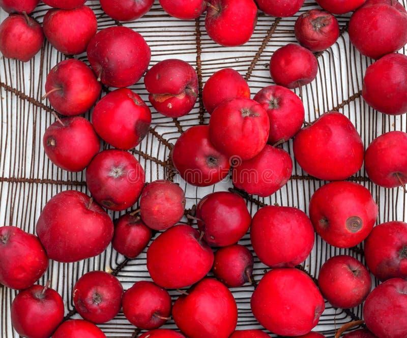 Metalu kosz z czerwonych smakowitych świeżych dzielnicowych soczystych zdrowych jabłek jabłczaną rozmaitością Gloster 69 na biały zdjęcia royalty free
