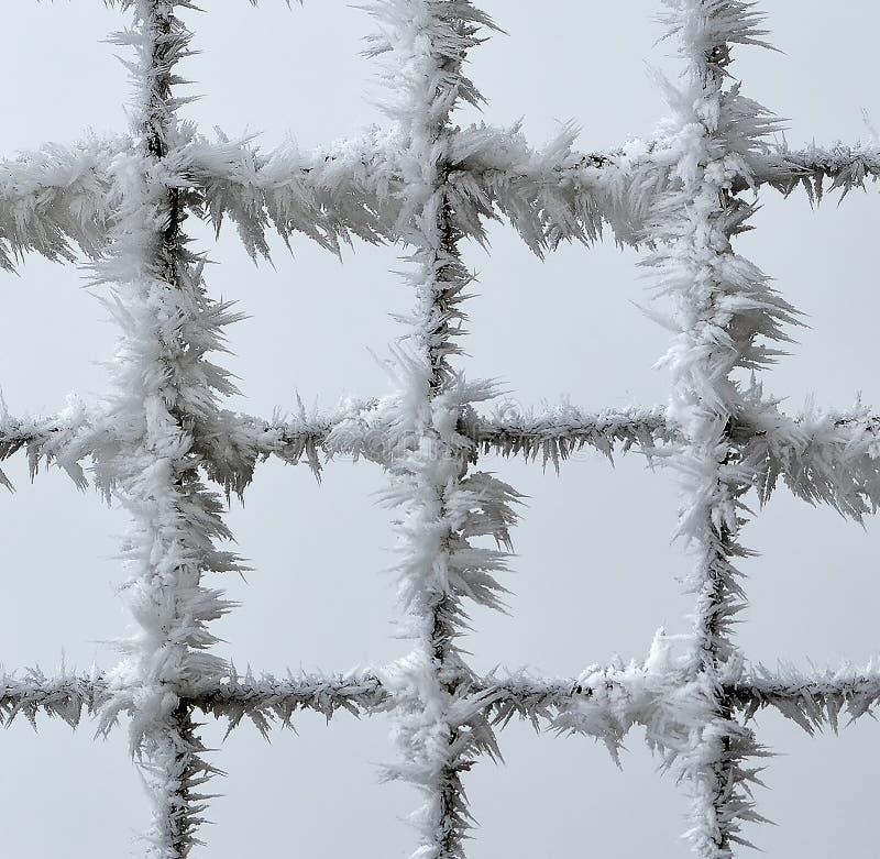 Metalu ogrodzenie zakrywający z mrozem zdjęcia royalty free