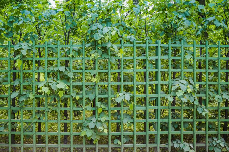 Metalu w kratkę ogrodzenie przerastający z roślinnością jako tło lub tło obraz stock