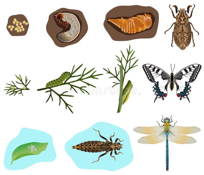 Metamorfose dos insetos ilustração royalty free