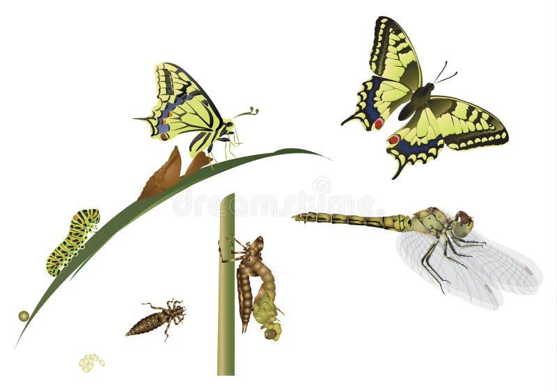 metamorfosis ilustración del vector