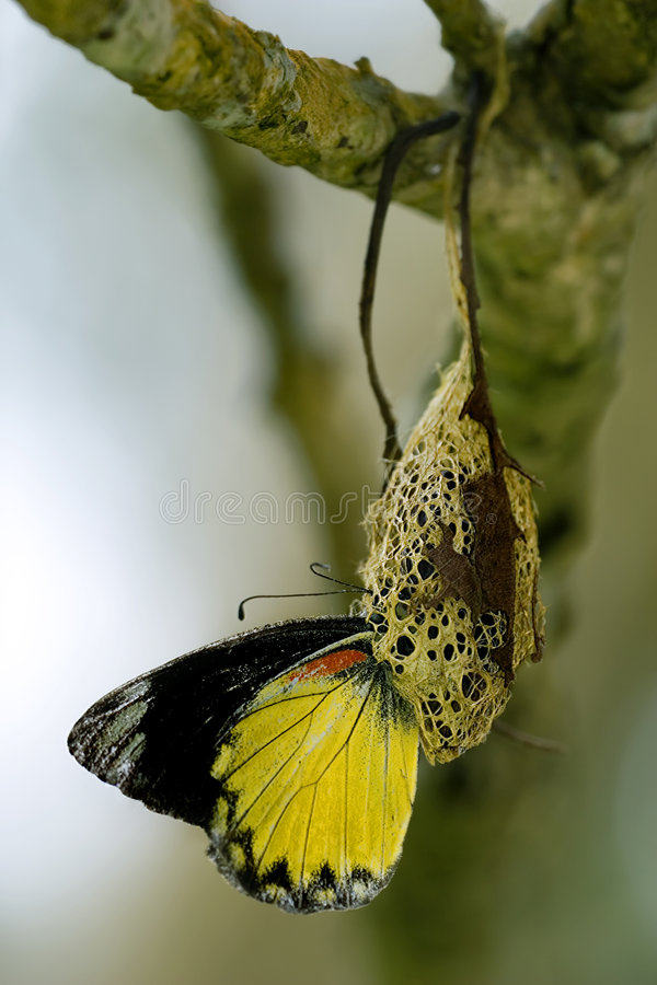Metamorphose stockbild