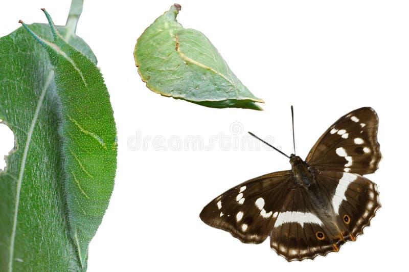 metamorphosis royaltyfria foton