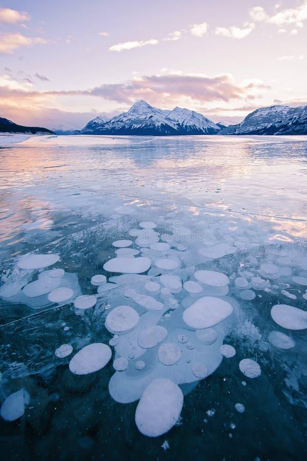Metangasbubblor som frysas i Abraham Lake, Clearwater County, Alberta, Kanada arkivfoton
