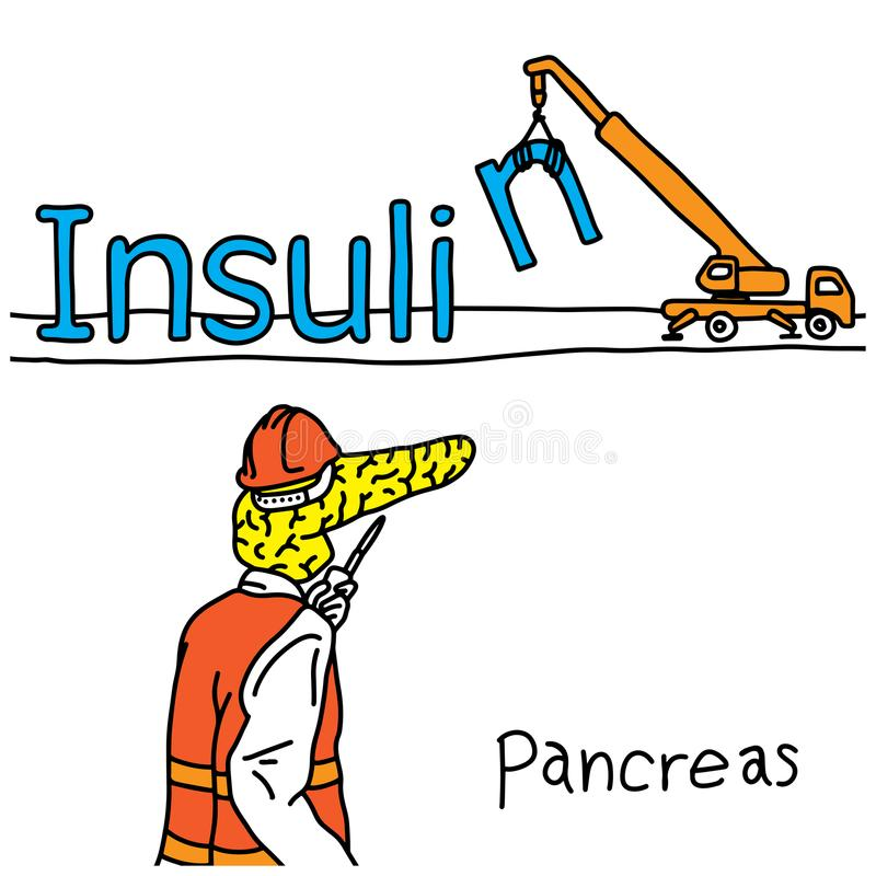 metaphor function of human pancreas is to produce insulin hormone vector illustration sketch hand drawn with black lines, isolate stock illustration