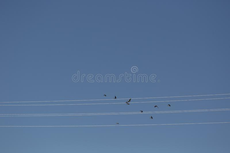 Birds fly along the wires, like notes on a stave royalty free stock photo