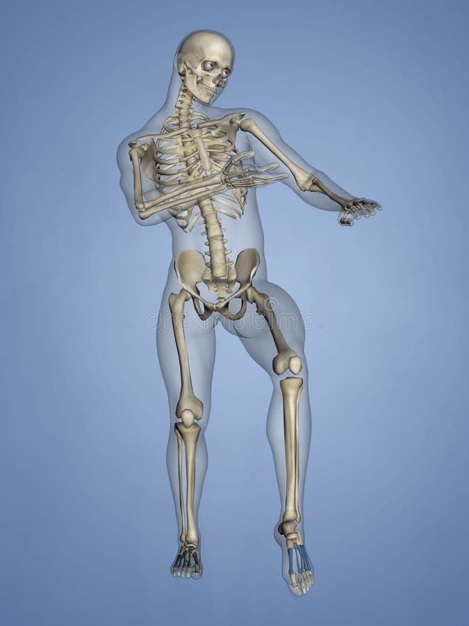 Metatarsal Bones, 3D Model royalty free stock photography