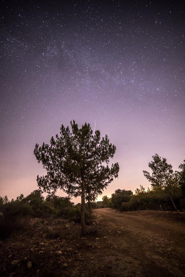 Meteora e un albero immagini stock