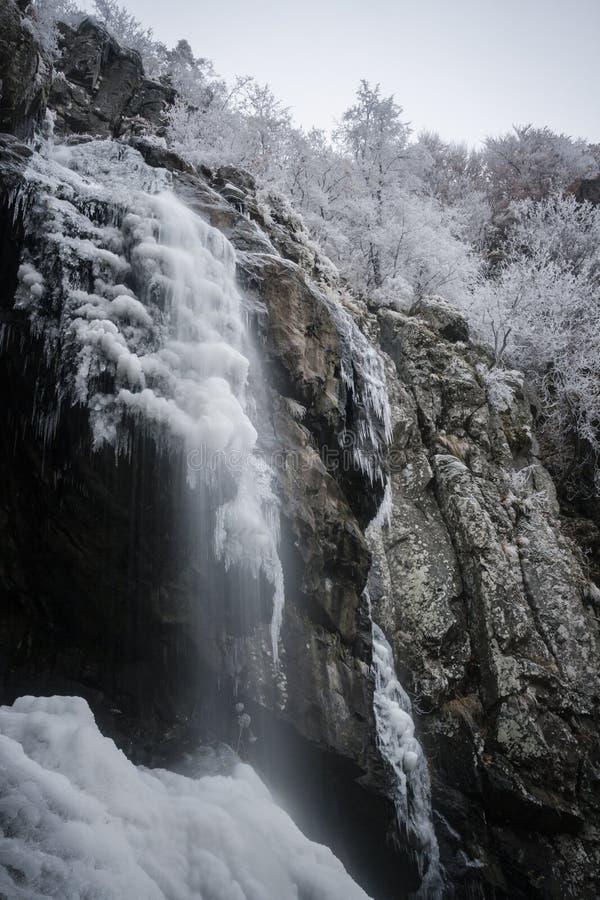 15 meter hög fryst vattenfall i skogen arkivbilder