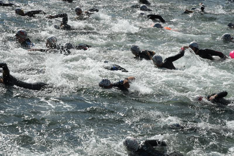 800 METER SWIMMING SPORTS. Copenhagen/Denmark 25.August 2018_ 800 meter swimming sport marathon in around Copenhagen habours canal today on saturday. . Photo royalty free stock photos