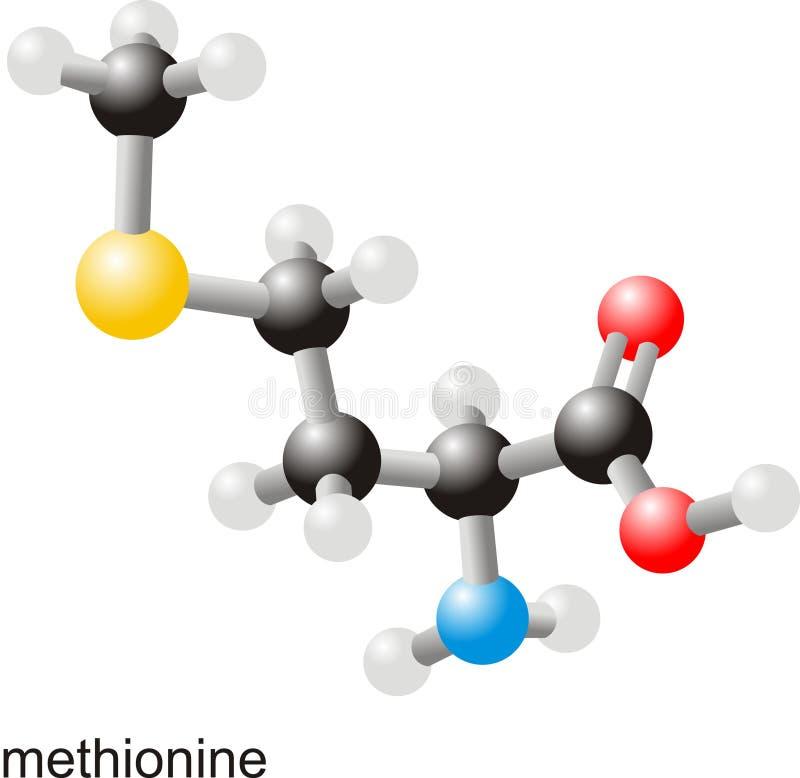methioninemolekyl royaltyfri illustrationer
