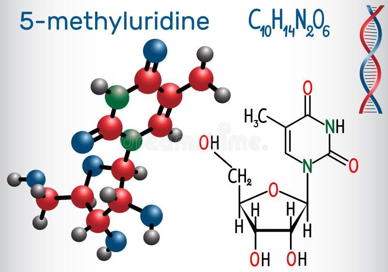 5-methyluridine ribothymidine - pyrimidinenucleosidemolekyl royaltyfri illustrationer