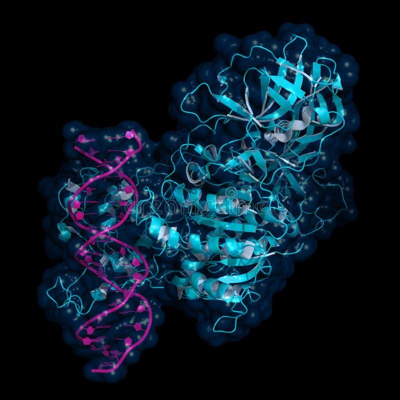 Metiltransferasi del DNA royalty illustrazione gratis