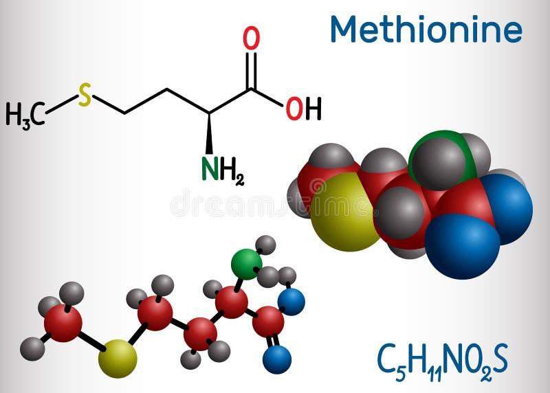 Metionina l metionina, encontrada, mol?cula del amino?cido esencial de M Modelo estructural de la f?rmula qu?mica y de la mol?cul stock de ilustración