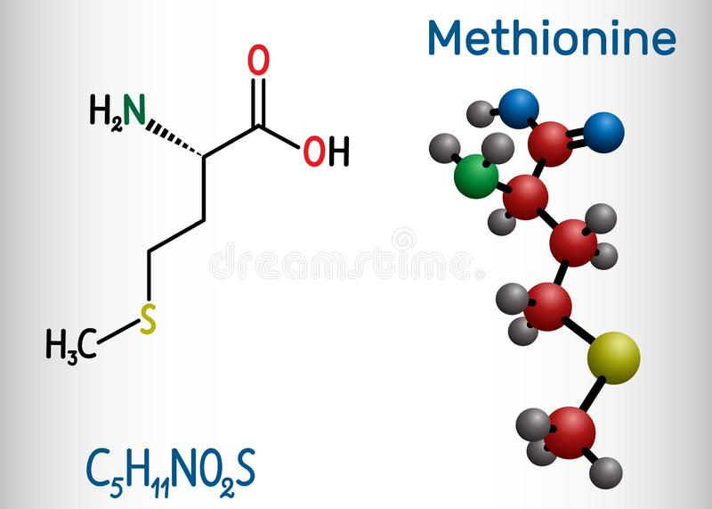 Metionina l metionina, encontrada, mol?cula del amino?cido esencial de M Modelo estructural de la f?rmula qu?mica y de la mol?cul ilustración del vector